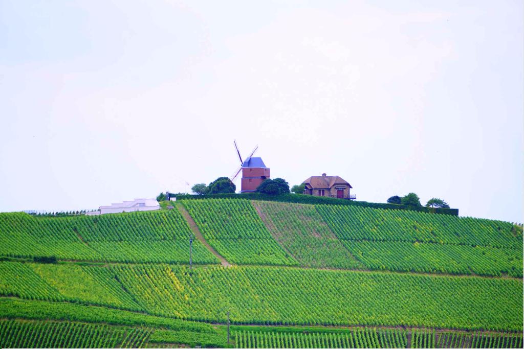 champagne-landscape