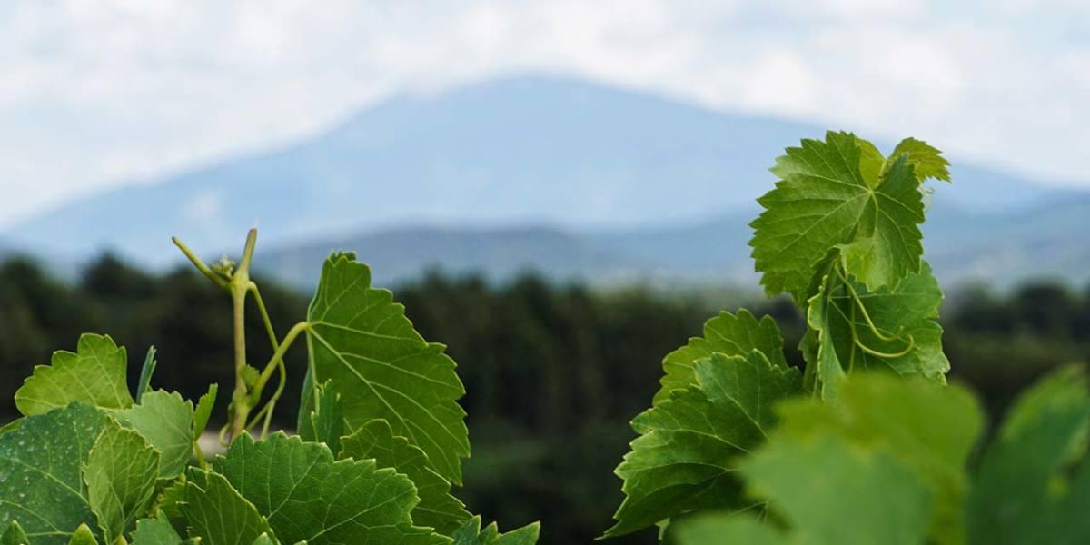 cotes-du-rhone-vine-cairanne-rasteau-cover
